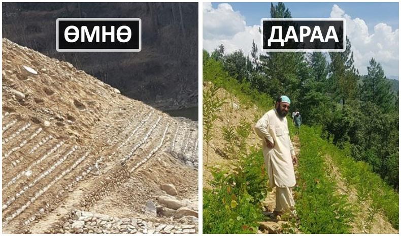 """""""Модон цунами"""" - Пакистанчуудын 10 тэрбум мод тарих төсөл жилийн дараа үр шимээ өгч эхэлжээ"""