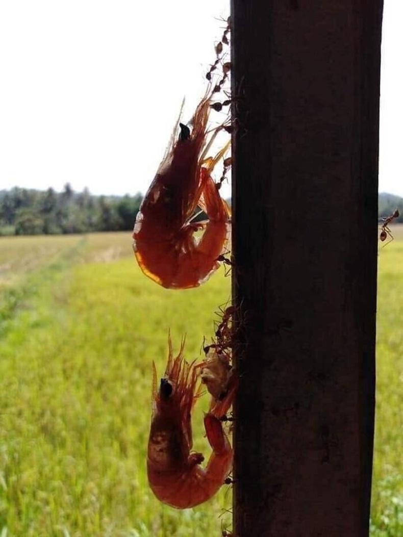 Сам хорхой авч явж буй шоргоолжнууд