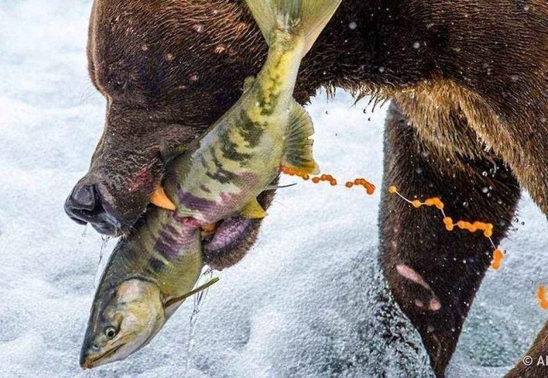 """""""National Geographic""""-ын шилдэг гэрэл зургуудыг танилцуулжээ"""