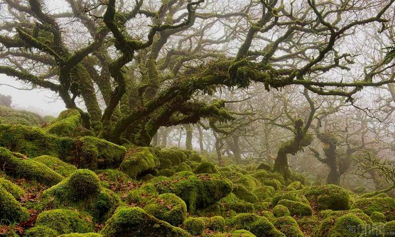 """Английн """"Wistman""""-ний мод"""