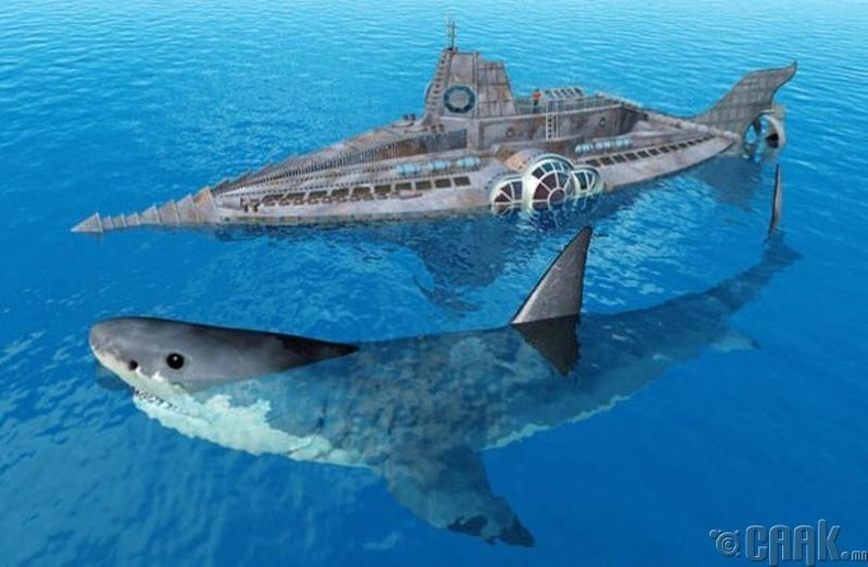 Мегалодон - Аварга цагаан загас