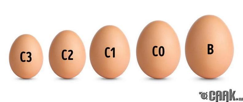 """Хамгийн том нь """"В"""" төрлийн өндөг"""