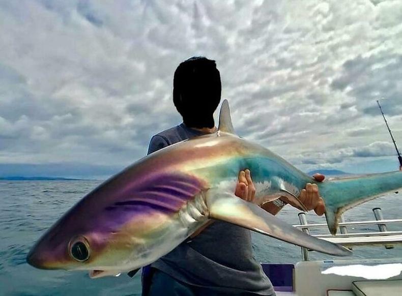 Гоёмсог солонгорсон өнгөтэй аварга загас