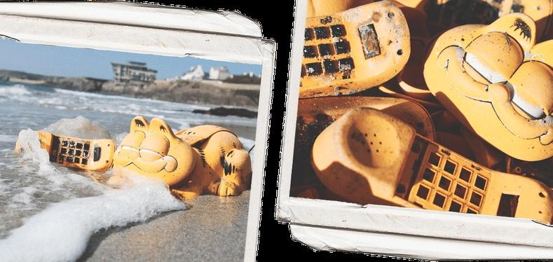 Францын далайн эрэг дээр гарч ирсэн Гарфилд мууран утаснууд