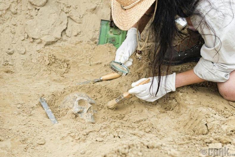 Археологич