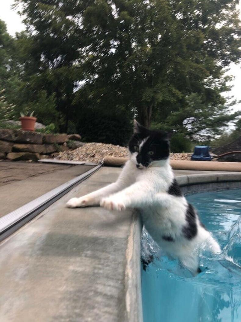 Муур усанд дургүй гэж хэлсний дараахан