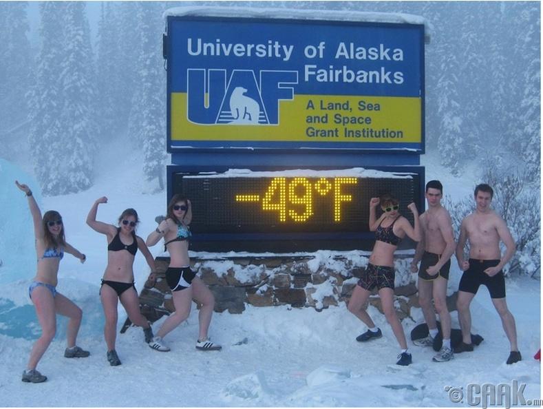 Аляска маягийн цасны баяр
