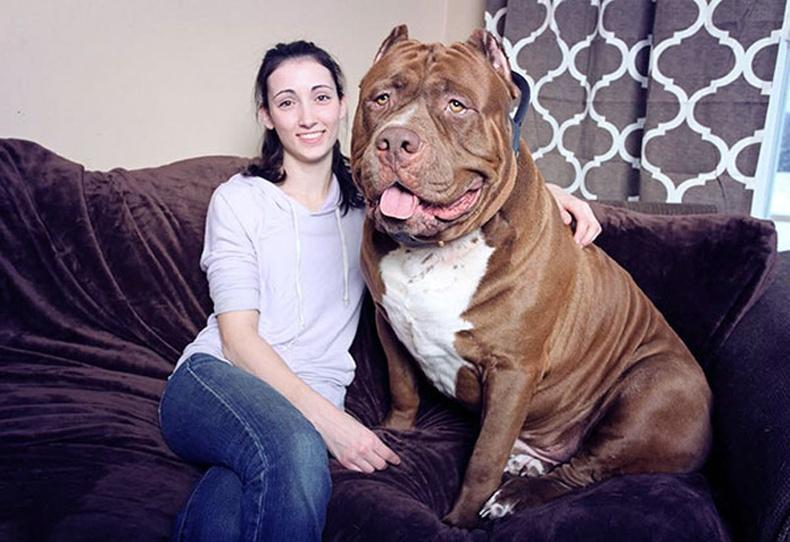 Дэлхийн хамгийн том хамгаалагч нохой