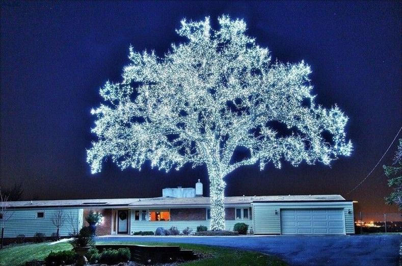 40000 гэрлээр чимэглэсэн мод