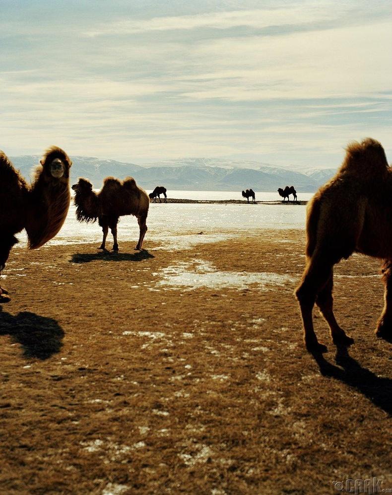 Монголын газар үнэхээр уудам тул хэн нэгний эзэмшил газар луу халдана гэж айх юмгүй