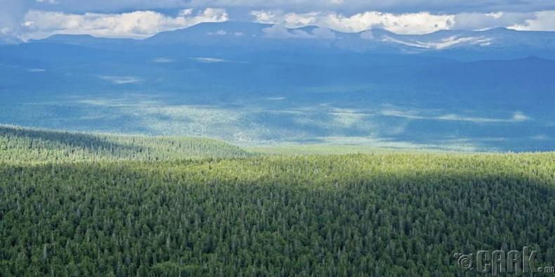 Хамгийн их ой модтой улс