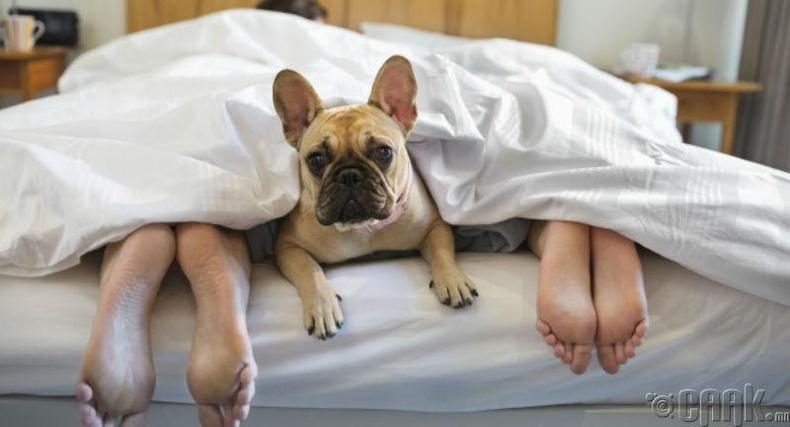Тэжээвэр амьтантайгаа цуг унтах