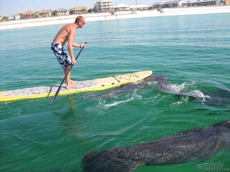 Шинэ Смирна далайн эрэг - АНУ, Флорида муж
