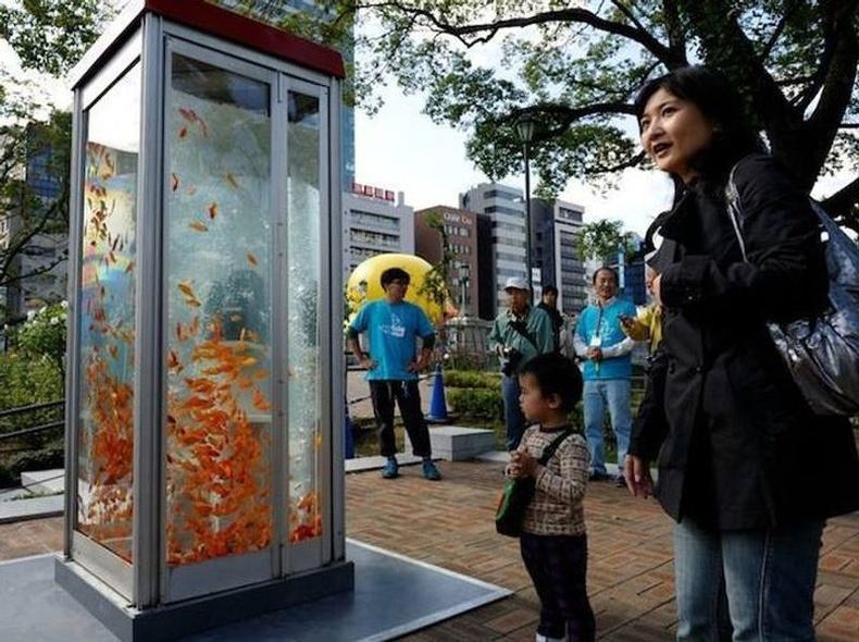 Японд хуучин телефон утасны бүхээгийг аквариум болгожээ
