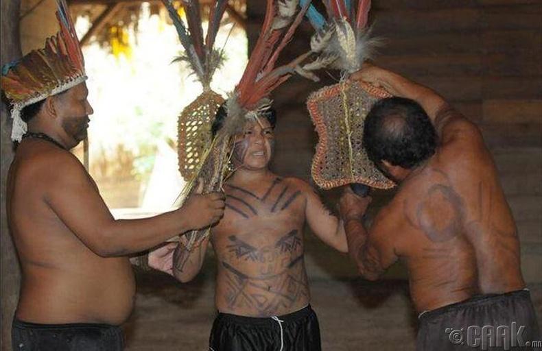 Бразилд аюултай шоргоолжинд хазуулдаг