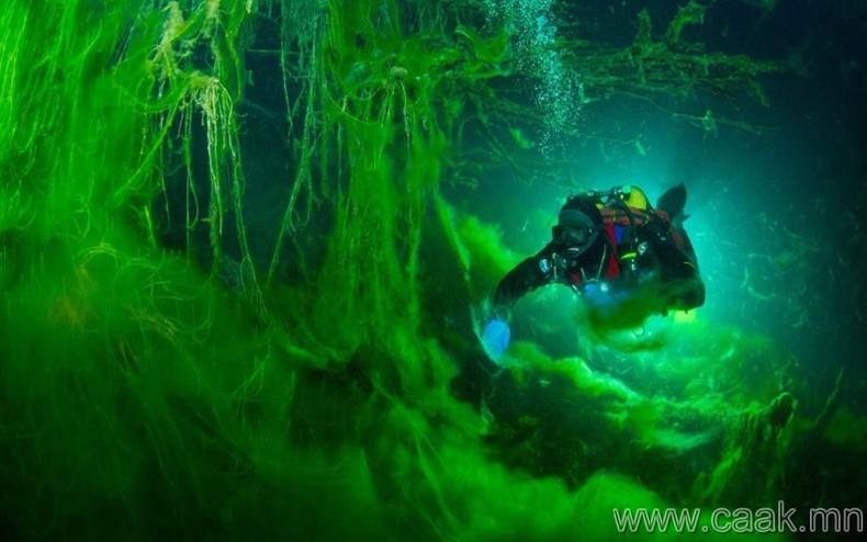 Усанд шумбагч