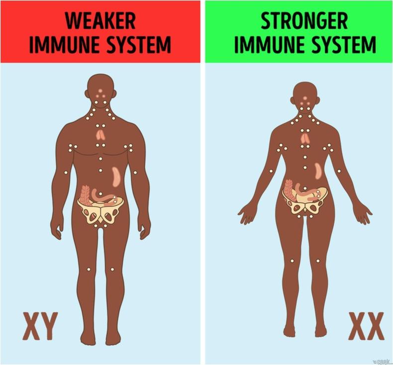 X хромосом нь дархлалын тогтолцоог дэмждэг