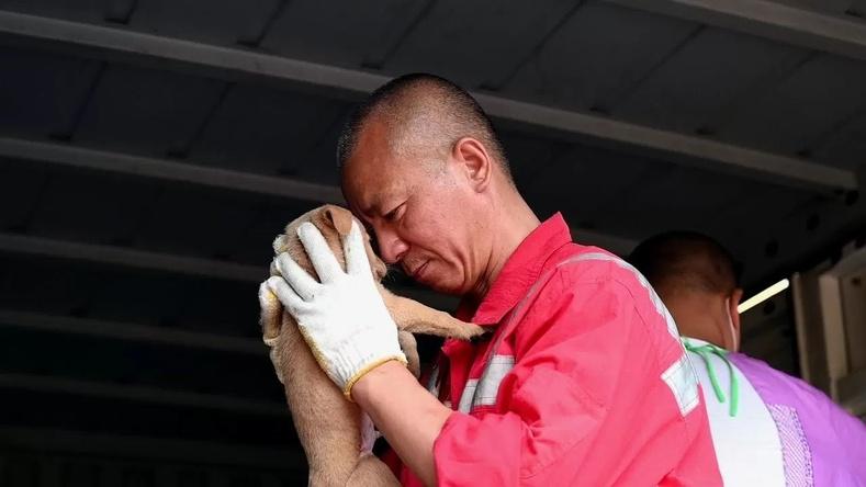 8000 амьтан аварсан Шанхайн хамба ламын түүх