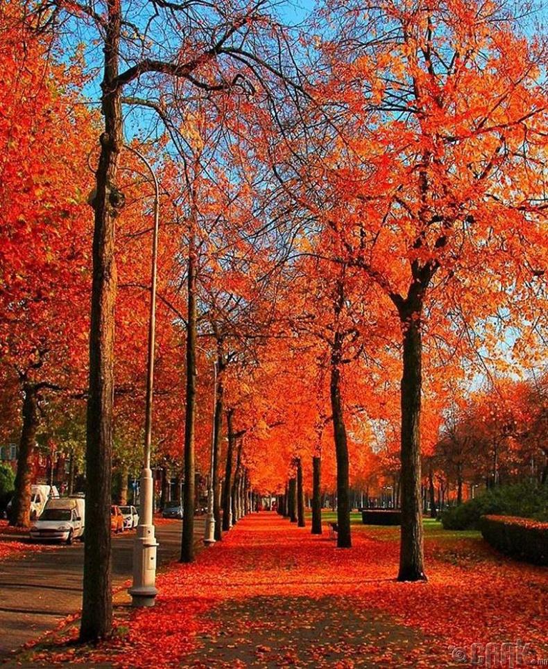 Амстердам, Нидерланд
