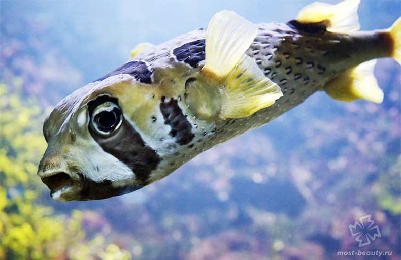 Хөөдөг загас