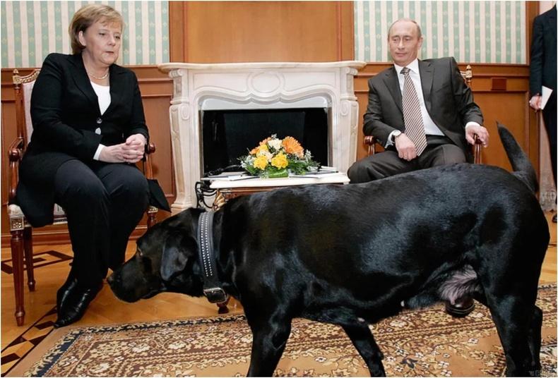 Түүний нохойноос айдгийг Путин мэднэ
