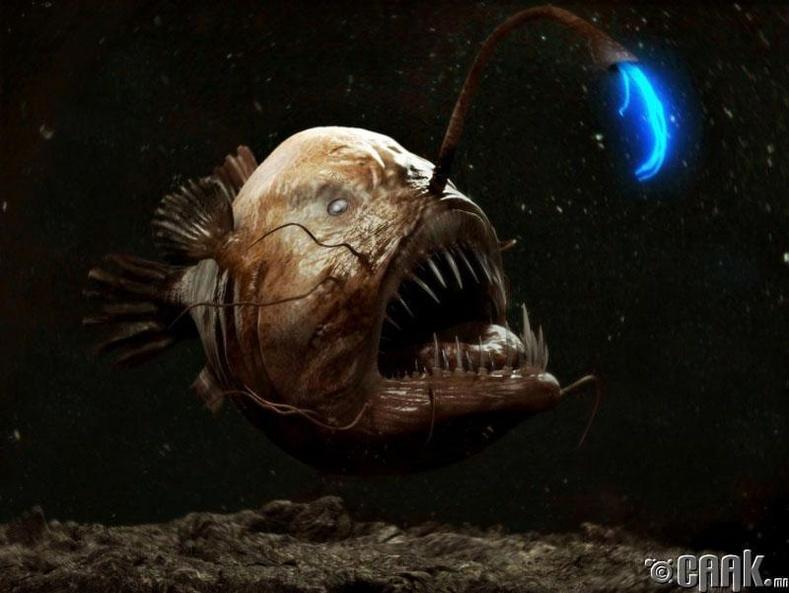 Гүн усны загас