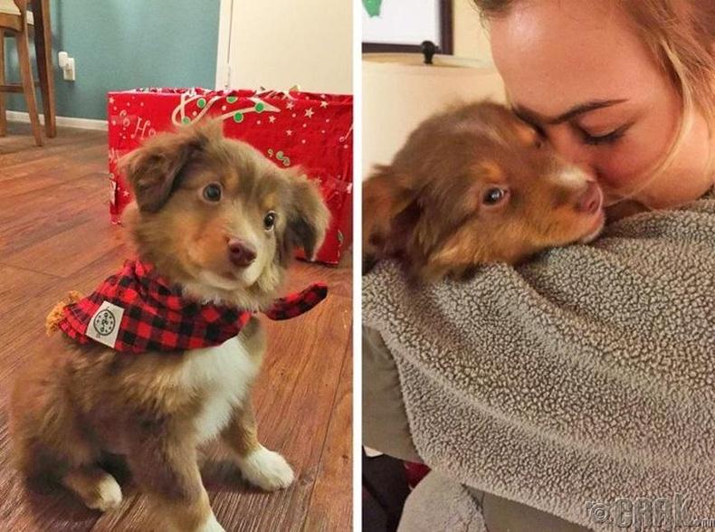 """""""Найз охин маань жаахан байхаасаа нохойтой болохыг хүсдэг байсан. Энэ зул сарын баярыг түүнийхээ хүслийг биелүүлж илүү онцгой  болгохоор шийдсэн юм."""""""