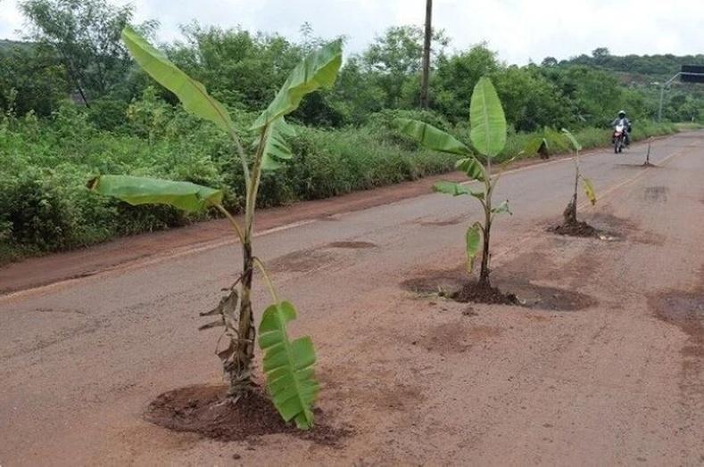 Бразилд машинаасаа буулгүй банана авч идэх боломжтой
