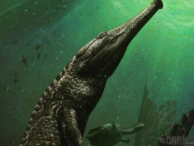 Далайн матар  (Machimosaurus Rex)