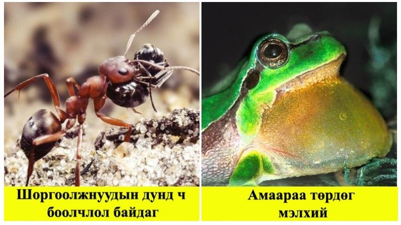 Эрдэмтдийн олж илрүүлсэн амьтдын тухай ер бусын баримтууд