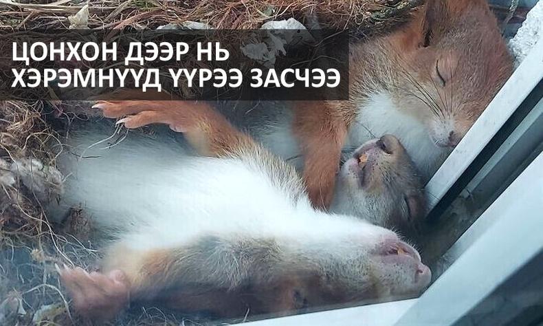 Амьтдад хайр энэрэл хамгаас илүү хэрэгтэйг харуулах өхөөрдөм мөчүүд