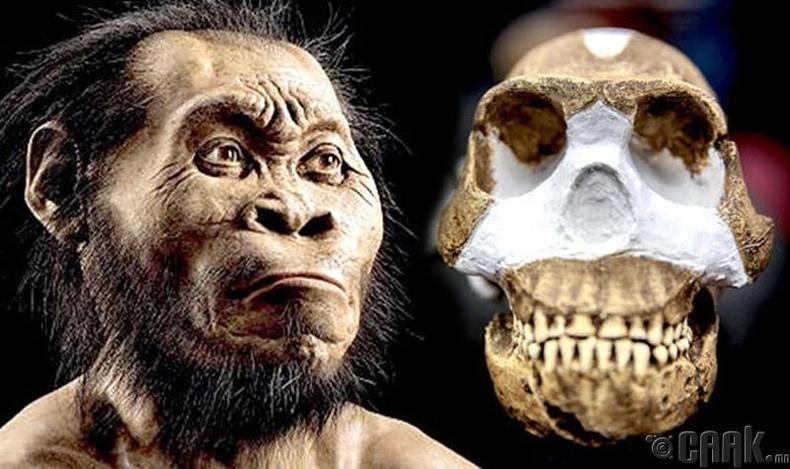 Хомо Наледи (Homo Naledi)