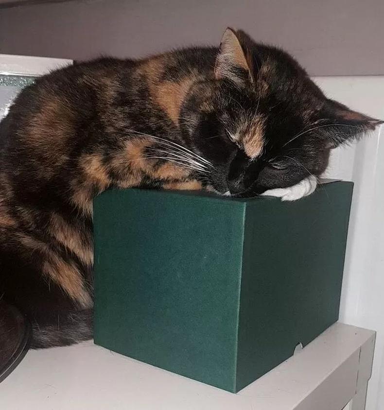 """""""Ээжийгээ өөд болсны дараа би түүний муурыг авч тэжээж байгаа юм. Муур байнга ээжийн чандрыг хийсэн савыг дэрлэж унтдаг."""""""