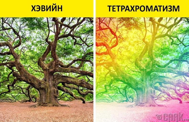 Тетрахромат