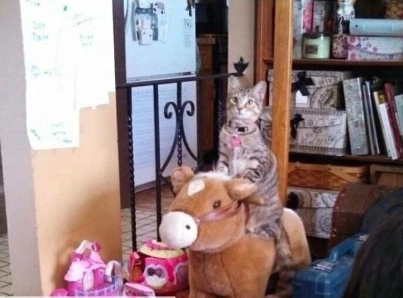 Өөрийгөө хүүхэд гэж боддог айлын эрх муур морийг нь хөдөлгөж өгөхгүй л бол миавлаад байдаг гэнэ.