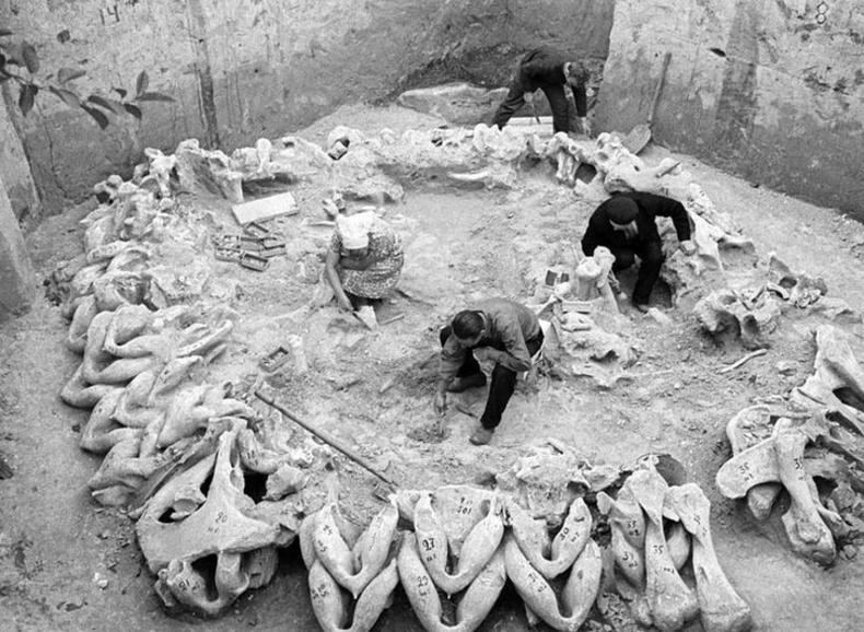 Арслан зааны ясаар тойруулан барьсан хамгийн эртний суурингийн үлдэгдэл Украйны Межирич тосгоноос олджээ.