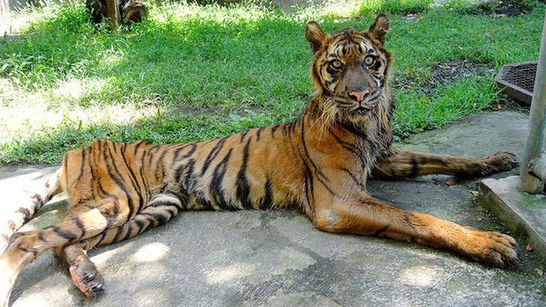 Индонези дахь өрөвдөлтэй амьтны хүрээлэн