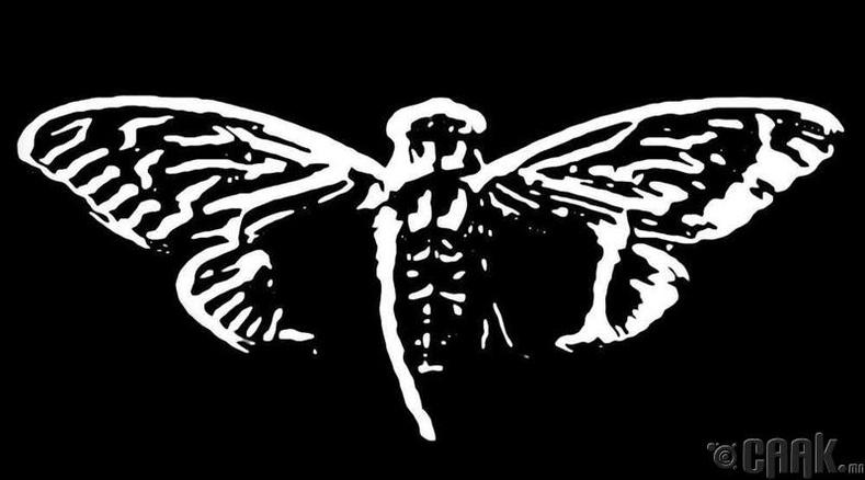 """Cicada 3301"""