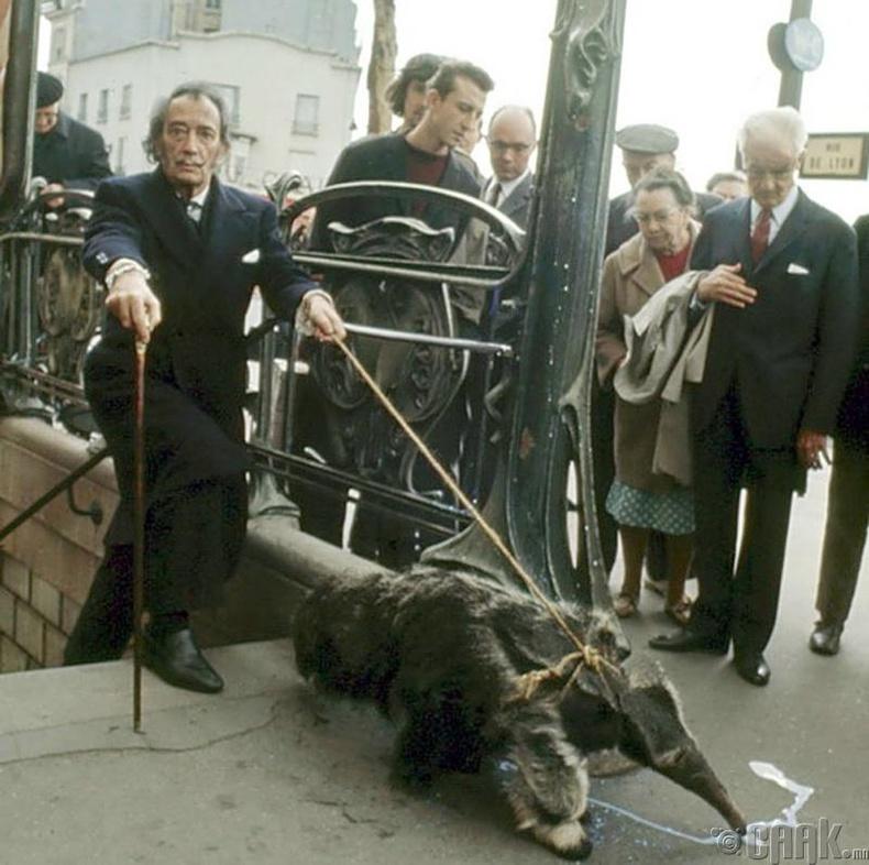 Зураач Сальвадор Дали (Salvador Dali) Парисын гудамжаар тэжээвэр амьтнаа салхилуулж байна
