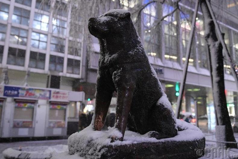 Hachiko / Хачико нохойн хөшөө
