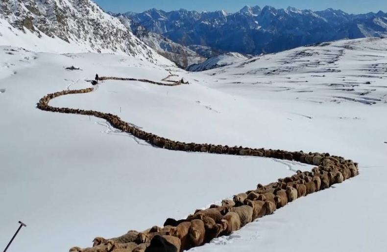 Хятад дахь хонин сүргийн асар том туувар (+Бичлэг)