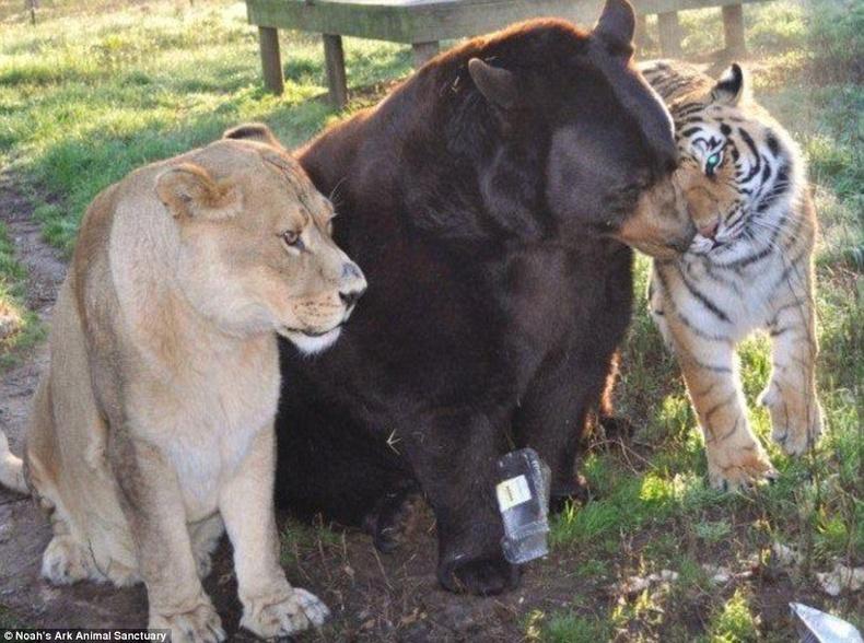 3 хүчтэний гайхалтай нөхөрлөл