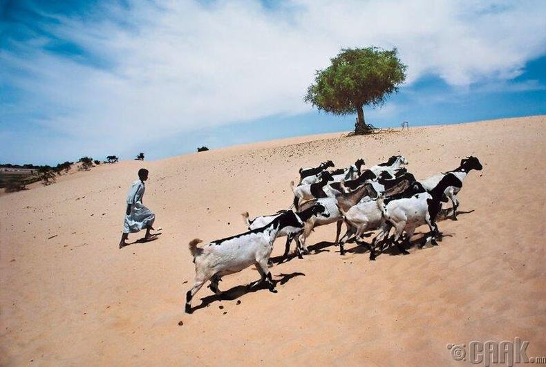 Чад улсын Риг-Риг
