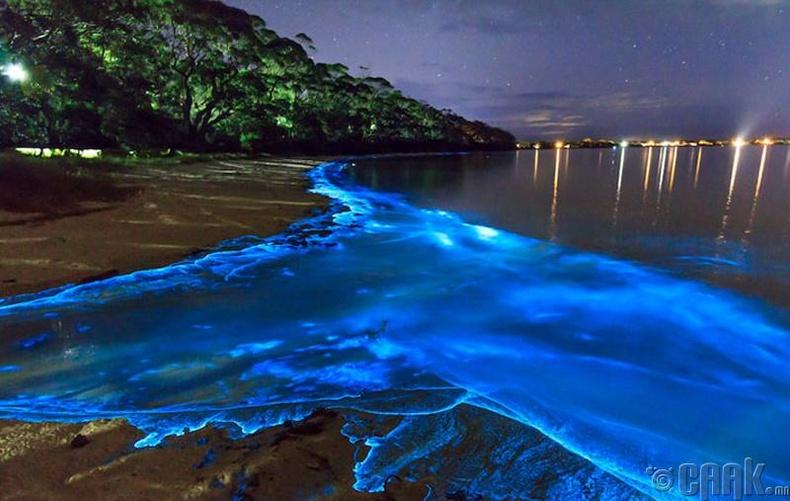 Гэрэлтдэг далайн хөвөө, Пуэрто-Рико улс