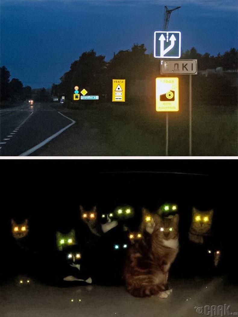 Гэрэл цацруулагч болон муур