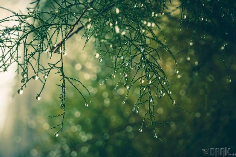 Борооны дараах үнэр