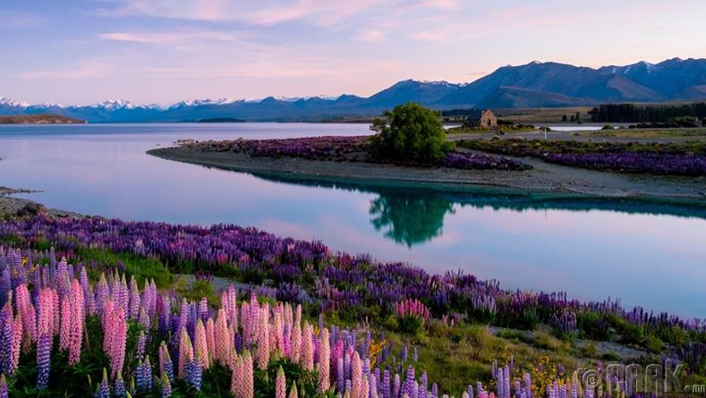 Кантербури муж, Шинэ Зеланд