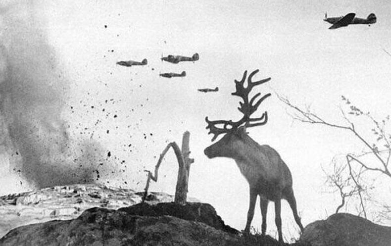 Германы бөмбөгдөлтийн үеэр дэлбэрэлтийн шоконд орсон буга - ЗХУ, 1941