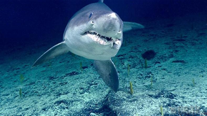 Махчин загас хэзээ унтдаг вэ?