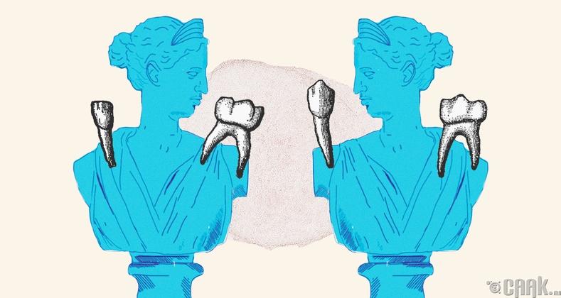 Шүд зөвхөн аман дотор ургадаггүй